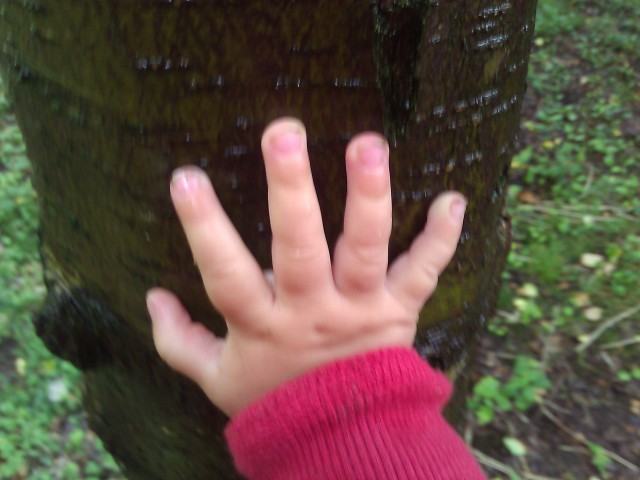 hands on a tree.