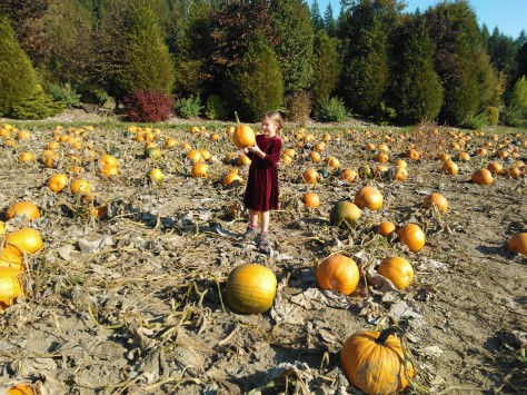 Look at all these pumpkins