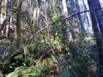alpabet in nature