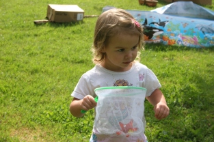 I'm trying to catch butterflies. what else can I find to put in my net?