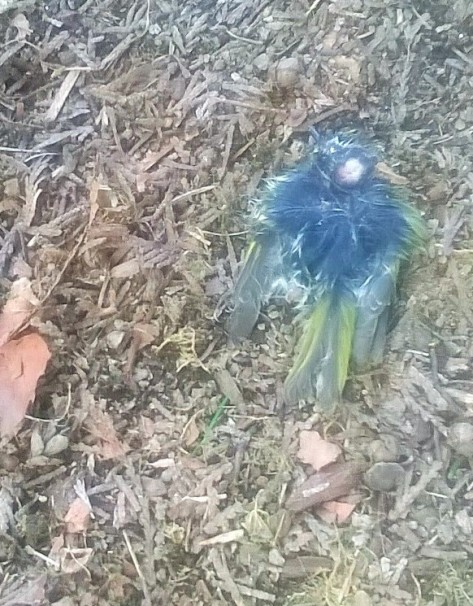 We found a dead birs in the garden. How did it get there? What shuld we do with it? We buried it under a tree.