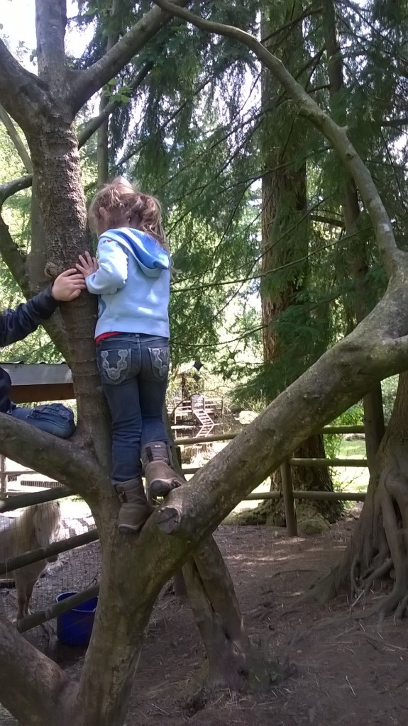 climbing trees at preschool