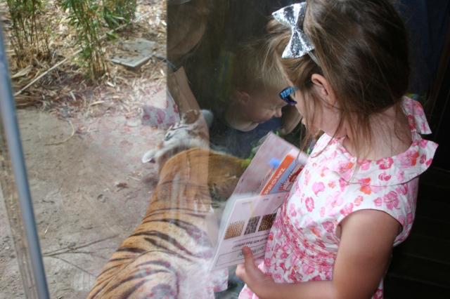 tiger markings
