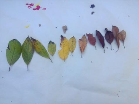leaf rainbow