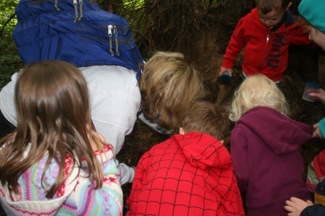 looking for bugs in a decomposing log