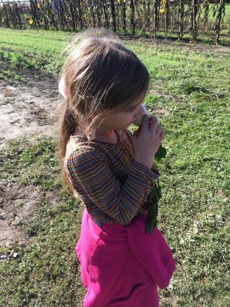 tasting a salad turnip