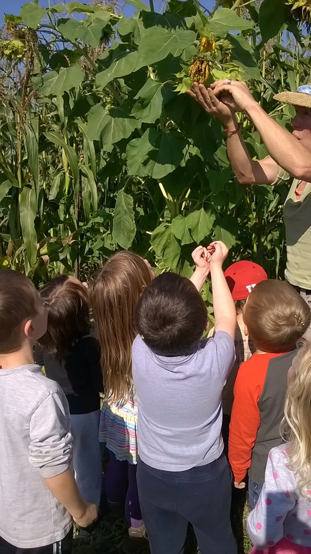 Have You Ever Eaten Every Part of a Plant? We did on our field trip to Oxbow Farm.