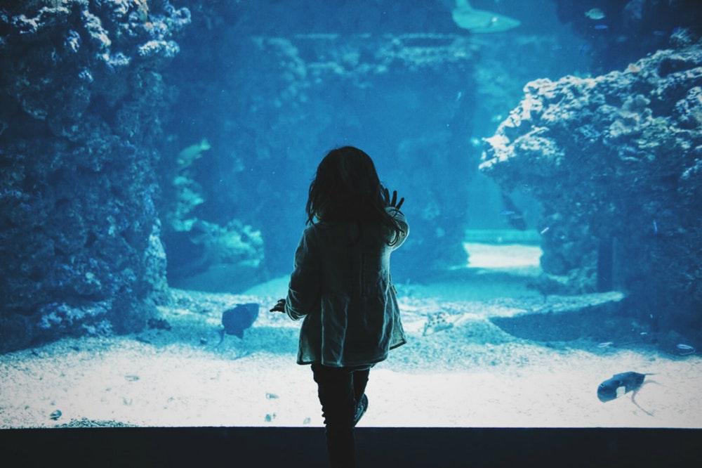 newzealand aquarium