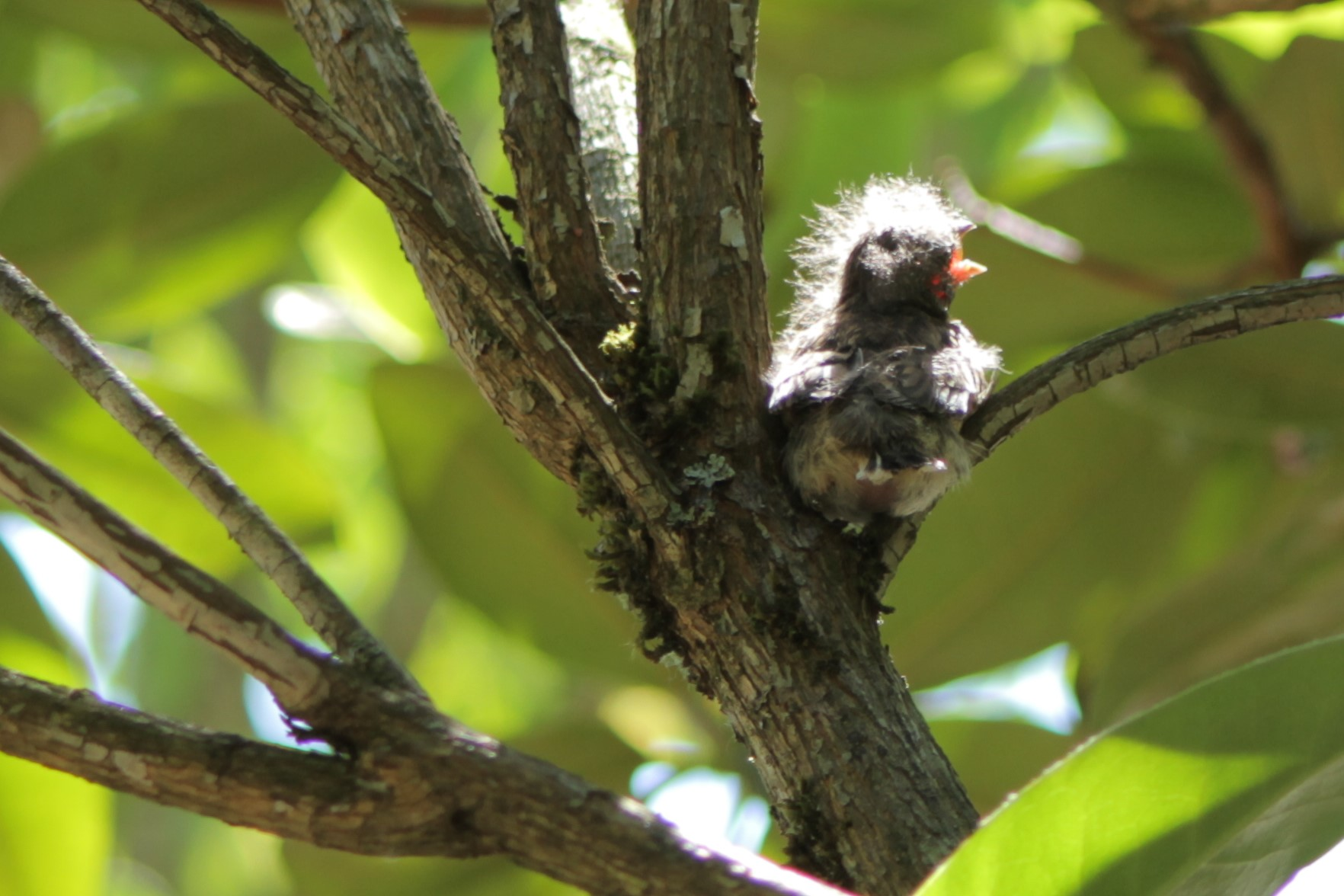sparrow chick in a tree